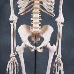 Модель людського скелета (180 см)